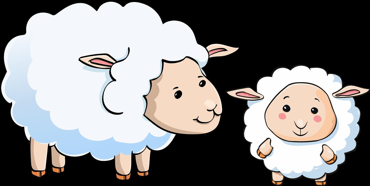 sheep-3539678_1280